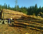 http://images01.olx-st.com/ui/16/31/16/1320379637_272732516_5--TIMBER-WANTED-LOGGING-SERVICES-FOREST-CLEARING-KING-PIERCE-KITSAP-COUNTY-WA-Washington.jpg