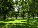 http://www.ilovenationalparks.org/images/nationalmalltrees.jpg